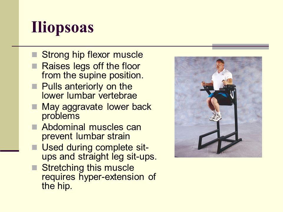 Iliopsoas Origins: iliac fossa vertebral bodies of the last thorasic and lumbar vertebrae I: lesser trochanter of the femur Actions: Flexion of the hi