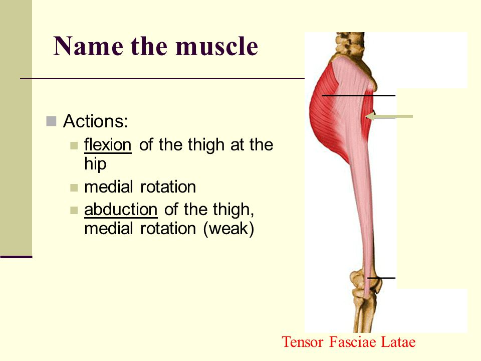 Actions flexion of the hip adduction Pectineus Name the muscle