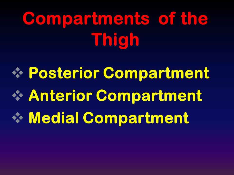 PPosterior Compartment AAnterior Compartment MMedial Compartment Compartments of the Thigh
