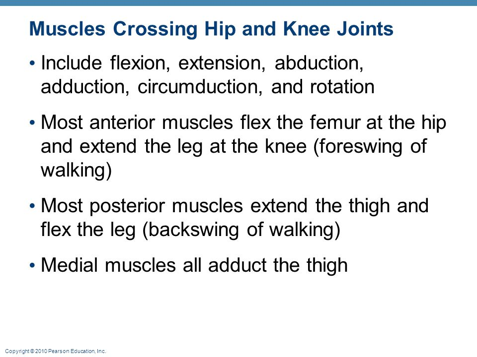 Copyright © 2010 Pearson Education, Inc. Muscles Crossing Hip and Knee Joints Include flexion, extension, abduction, adduction, circumduction, and rot