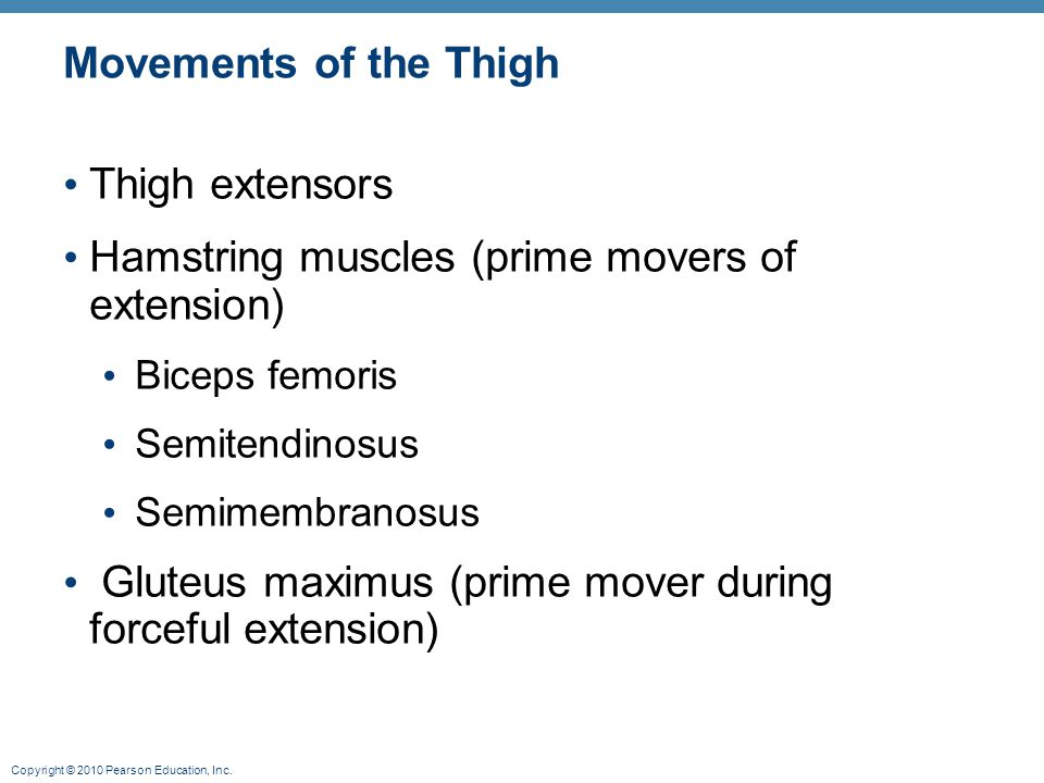 Copyright © 2010 Pearson Education, Inc. Movements of the Thigh Thigh extensors Hamstring muscles (prime movers of extension) Biceps femoris Semitendi
