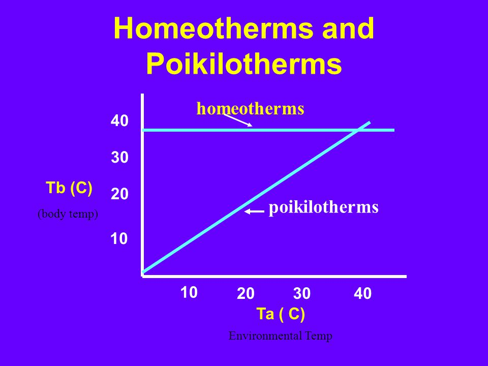 homeotherms poikilotherms Ta ( C) 10 203040 10 20 30 40 Tb (C) Homeotherms and Poikilotherms (body temp) Environmental Temp