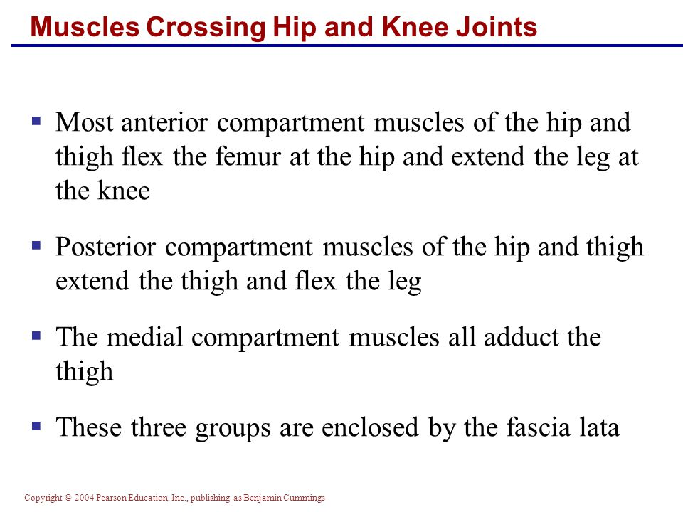 Copyright © 2004 Pearson Education, Inc., publishing as Benjamin Cummings  The ball-and-socket hip joint permits flexion, extension, abduction, adduction, circumduction, and rotation  The most important thigh flexors are the tensor fasciae latae and rectus femoris  The medially located adductor muscles and sartorius assist in thigh flexion Movements of the Thigh at the Hip: Flexion and Extension