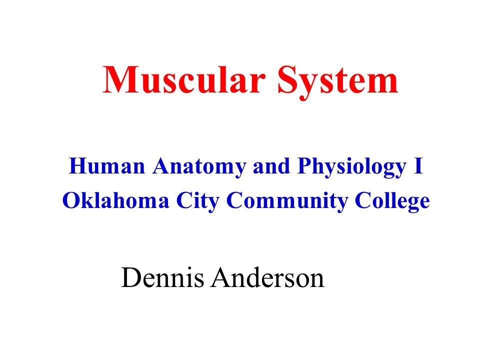 Muscular System Human Anatomy and Physiology I Oklahoma City Community College Dennis Anderson