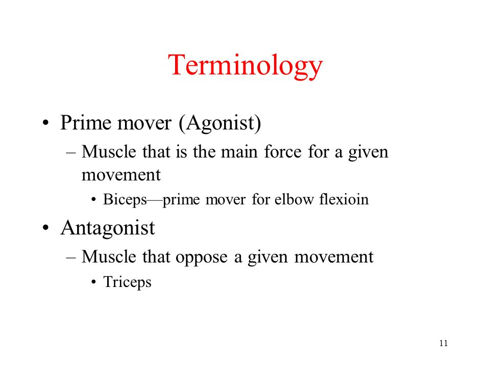 11 Terminology Prime mover (Agonist) –Muscle that is the main force for a given movement Biceps—prime mover for elbow flexioin Antagonist –Muscle that