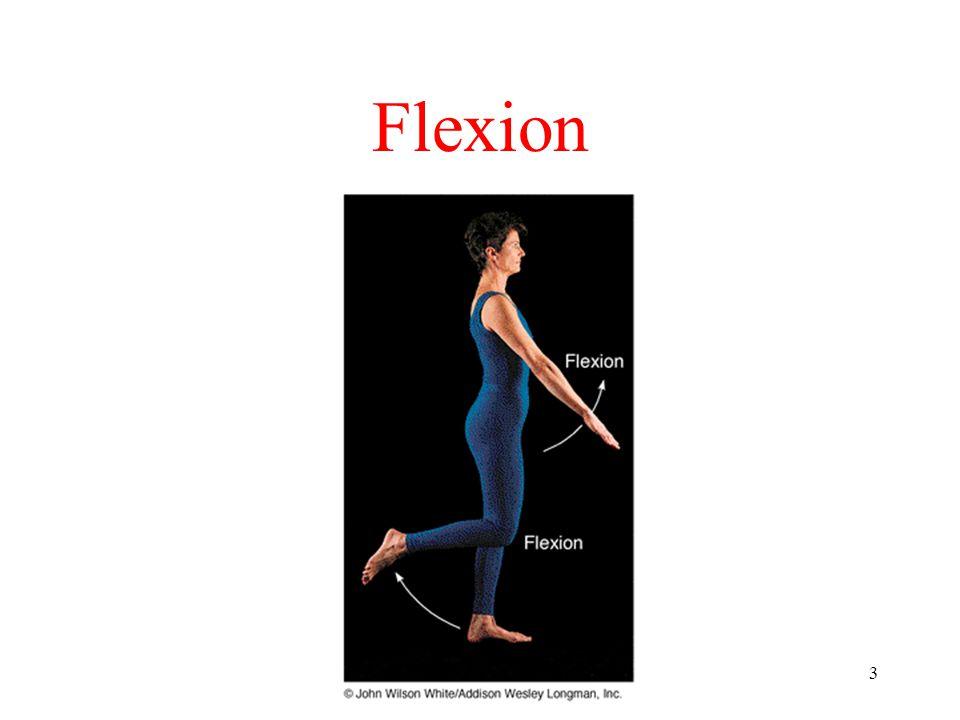 3 Flexion