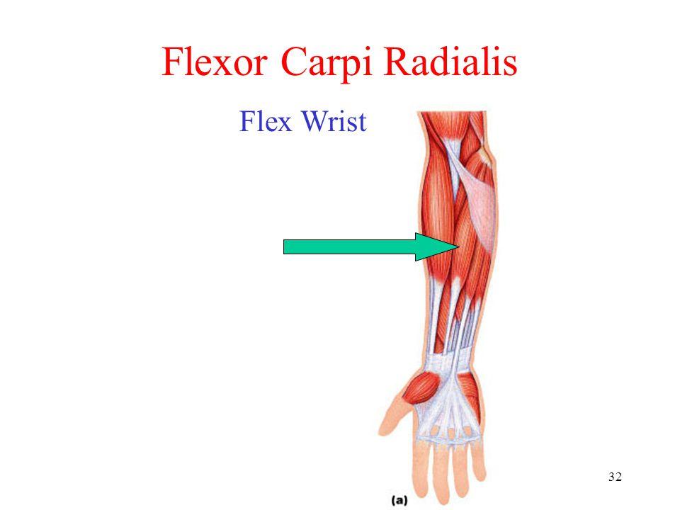 32 Flexor Carpi Radialis Flex Wrist