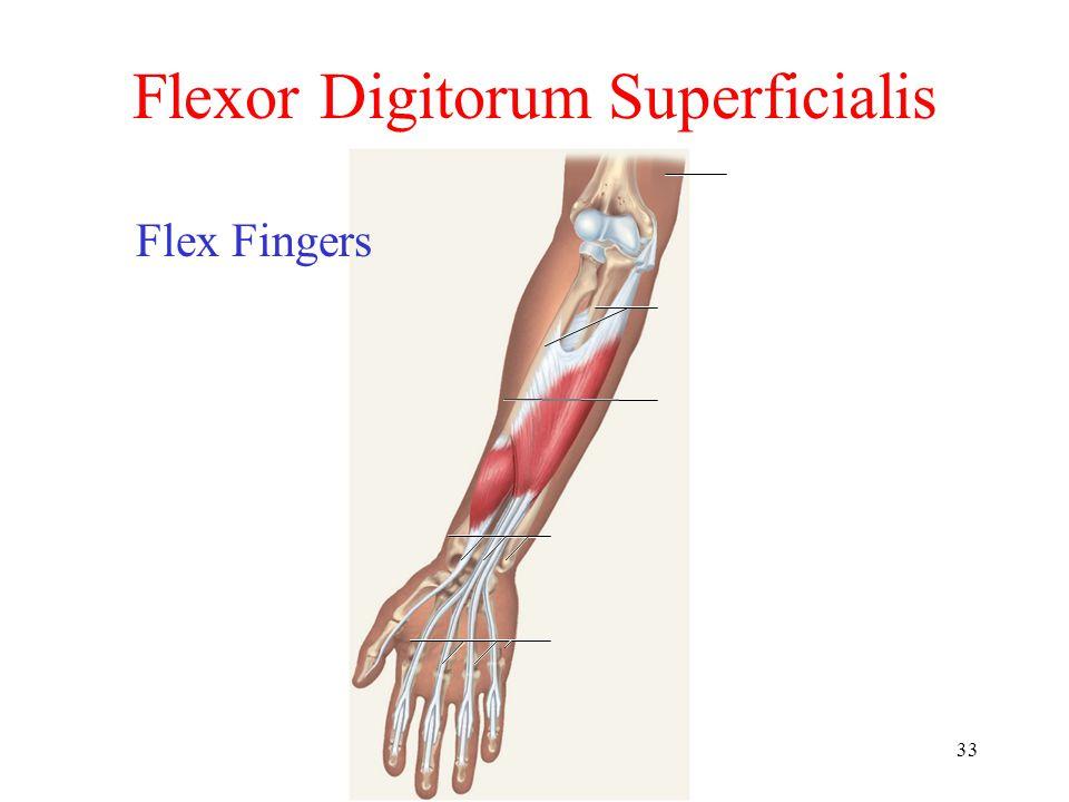 33 Flexor Digitorum Superficialis Flex Fingers
