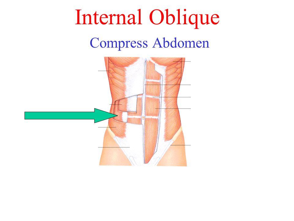 Internal Oblique Compress Abdomen
