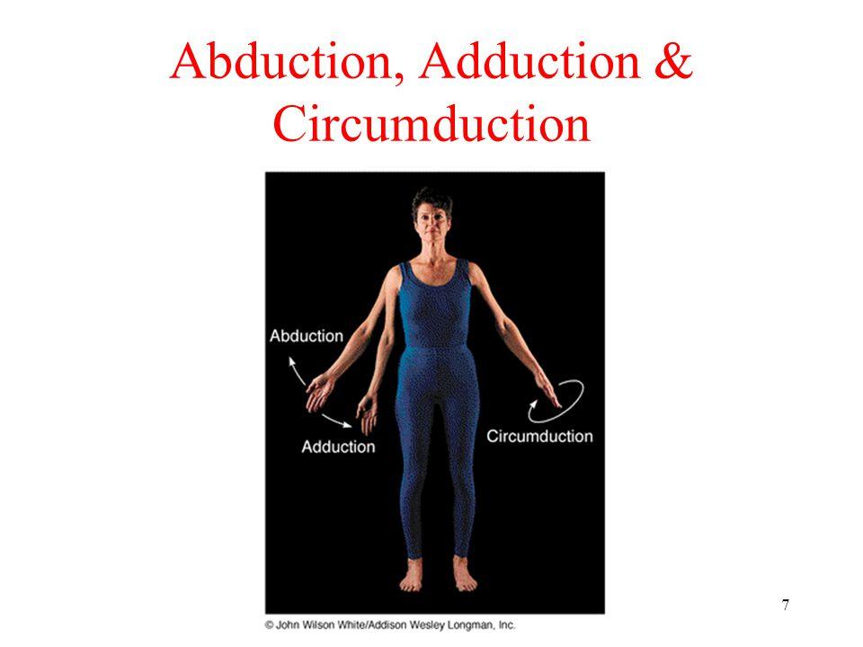 7 Abduction, Adduction & Circumduction