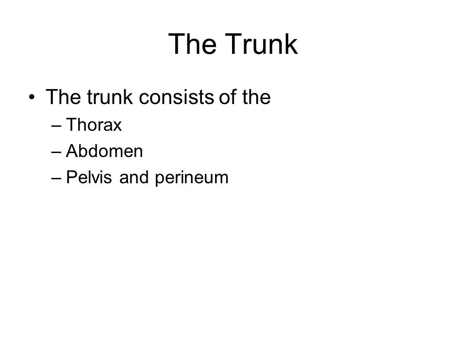 The Trunk The trunk consists of the –Thorax –Abdomen –Pelvis and perineum