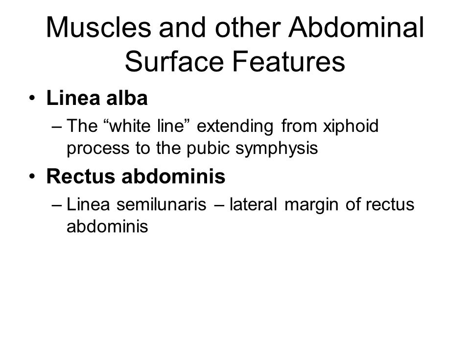 Muscles and other Abdominal Surface Features Linea alba –The white line extending from xiphoid process to the pubic symphysis Rectus abdominis –Linea semilunaris – lateral margin of rectus abdominis
