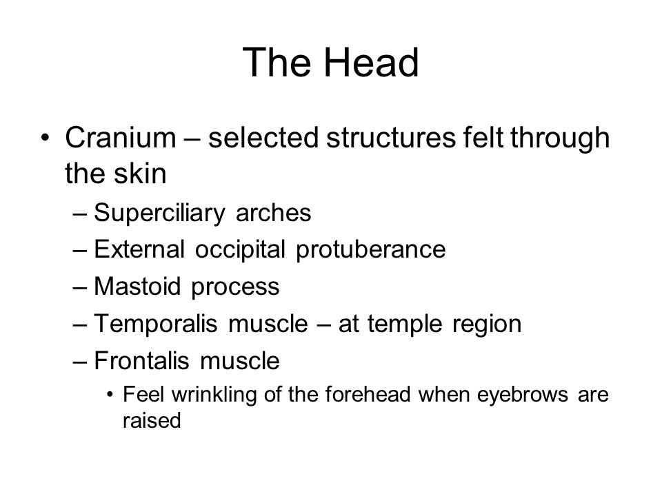 The Head Cranium – selected structures felt through the skin –Superciliary arches –External occipital protuberance –Mastoid process –Temporalis muscle – at temple region –Frontalis muscle Feel wrinkling of the forehead when eyebrows are raised