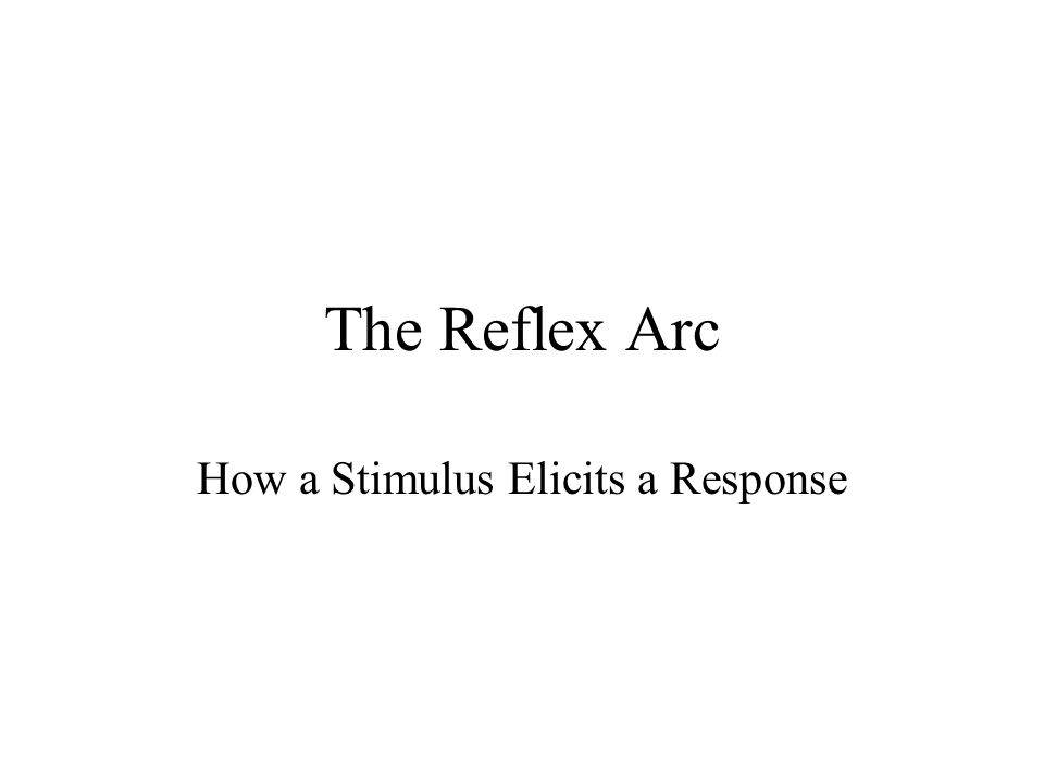 The Reflex Arc How a Stimulus Elicits a Response