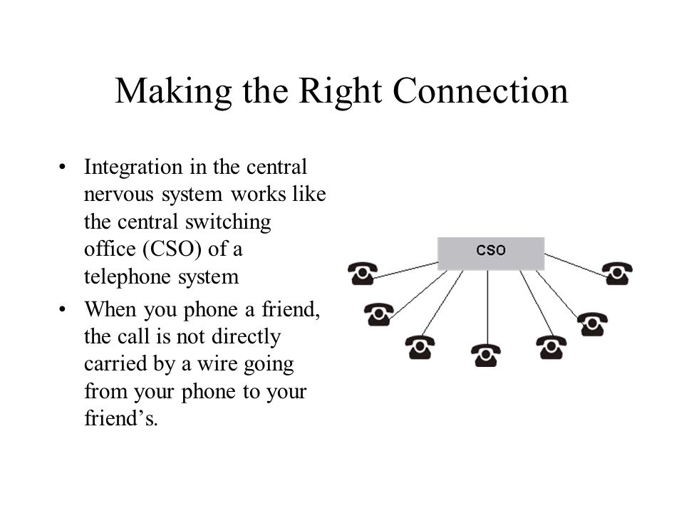 Making the Right Connection Integration in the central nervous system works like the central switching office (CSO) of a telephone system When you pho