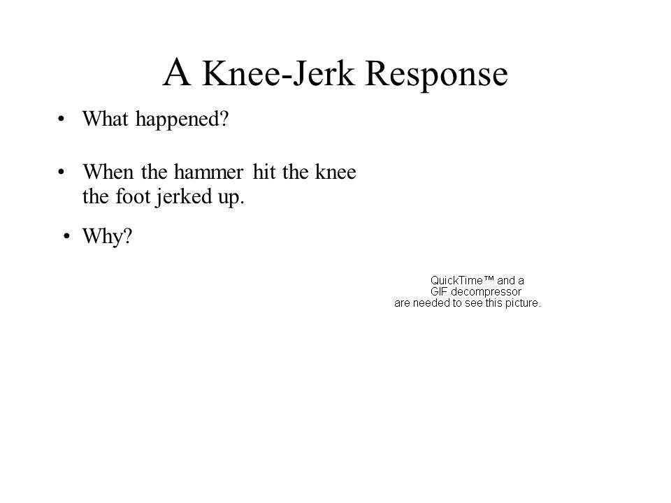 A Knee-Jerk Response What happened? Why? When the hammer hit the knee the foot jerked up.