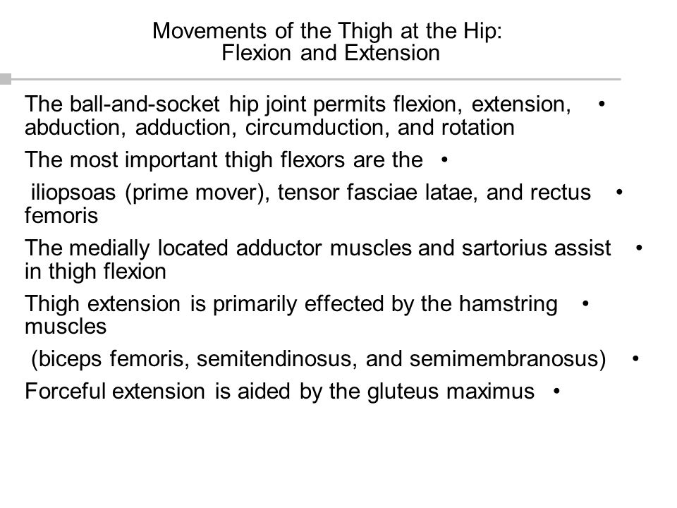 Movements of the Thigh at the Hip: Flexion and Extension The ball-and-socket hip joint permits flexion, extension, abduction, adduction, circumduction