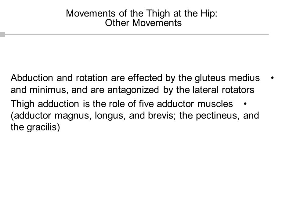 Movements of the Thigh at the Hip: Other Movements Abduction and rotation are effected by the gluteus medius and minimus, and are antagonized by the l