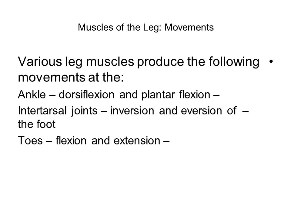 Muscles of the Leg: Movements Various leg muscles produce the following movements at the: –Ankle – dorsiflexion and plantar flexion –Intertarsal joint