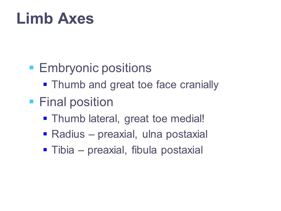 Limb Axes  Embryonic positions  Thumb and great toe face cranially  Final position  Thumb lateral, great toe medial.