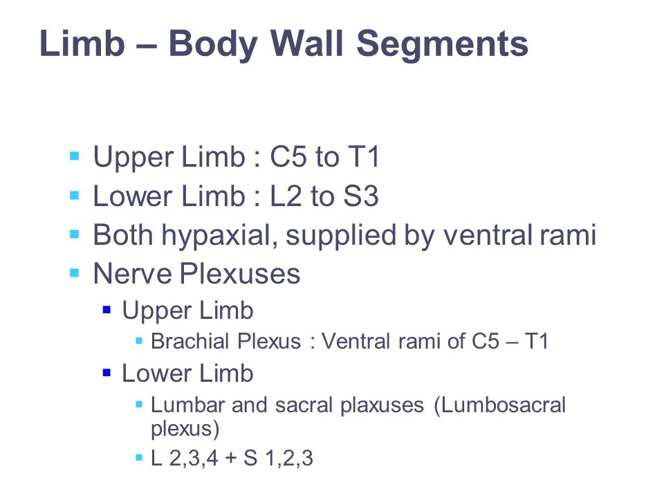 Limb – Body Wall Segments  Upper Limb : C5 to T1  Lower Limb : L2 to S3  Both hypaxial, supplied by ventral rami  Nerve Plexuses  Upper Limb  Brachial Plexus : Ventral rami of C5 – T1  Lower Limb  Lumbar and sacral plaxuses (Lumbosacral plexus)  L 2,3,4 + S 1,2,3