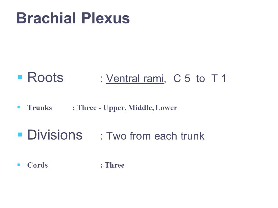 Brachial Plexus  Roots : Ventral rami, C 5 to T 1  Trunks: Three - Upper, Middle, Lower  Divisions : Two from each trunk  Cords: Three