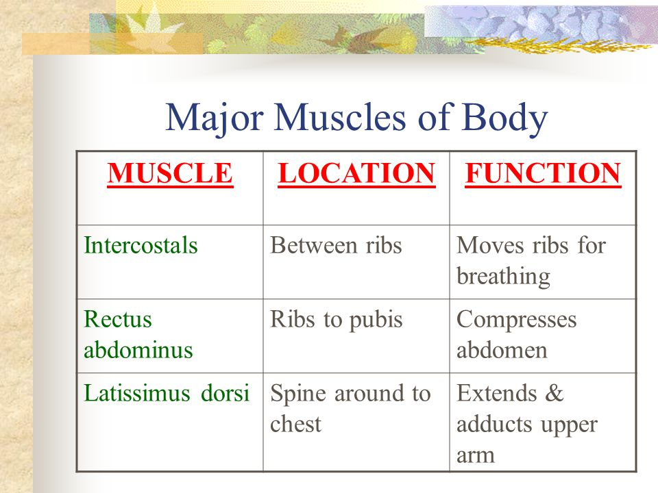 Major Muscles of Body MUSCLELOCATIONFUNCTION IntercostalsBetween ribsMoves ribs for breathing Rectus abdominus Ribs to pubisCompresses abdomen Latissi