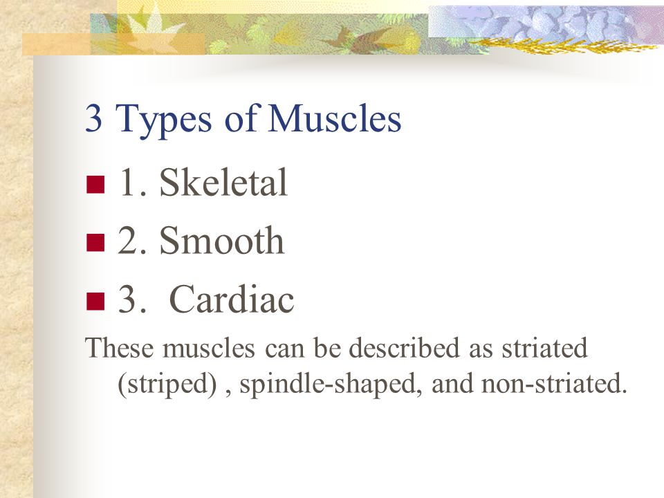 3 Types of Muscles 1. Skeletal 2. Smooth 3. Cardiac These muscles can be described as striated (striped), spindle-shaped, and non-striated.