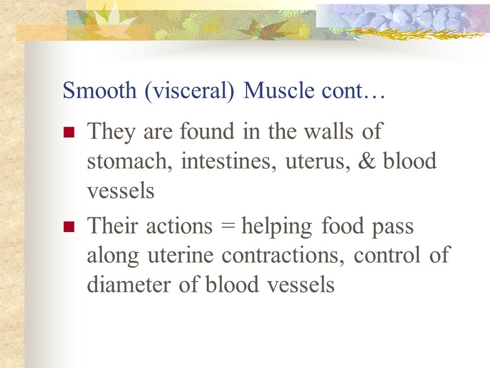 Smooth (visceral) Muscle cont… They are found in the walls of stomach, intestines, uterus, & blood vessels Their actions = helping food pass along ute