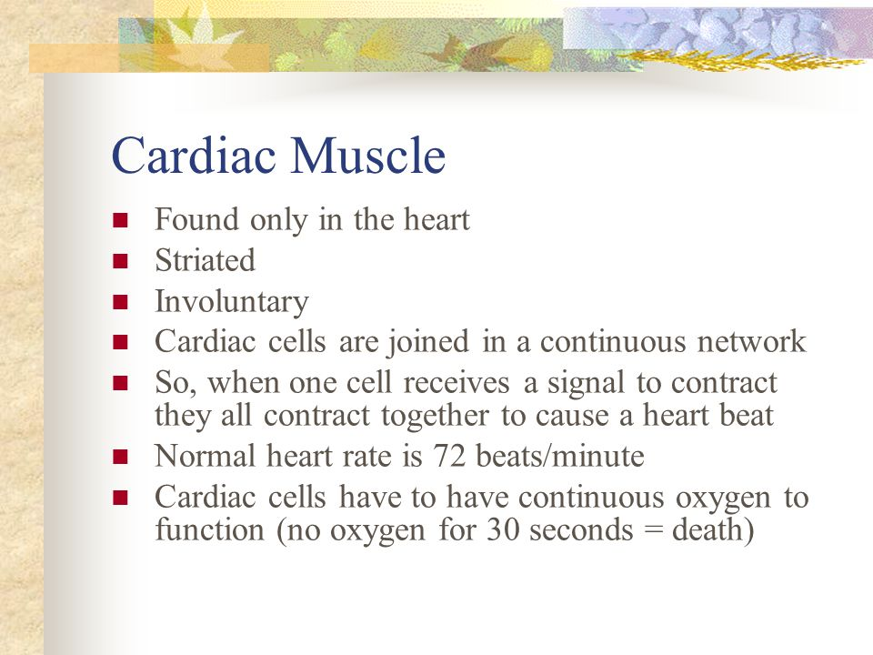 Cardiac Muscle Found only in the heart Striated Involuntary Cardiac cells are joined in a continuous network So, when one cell receives a signal to co