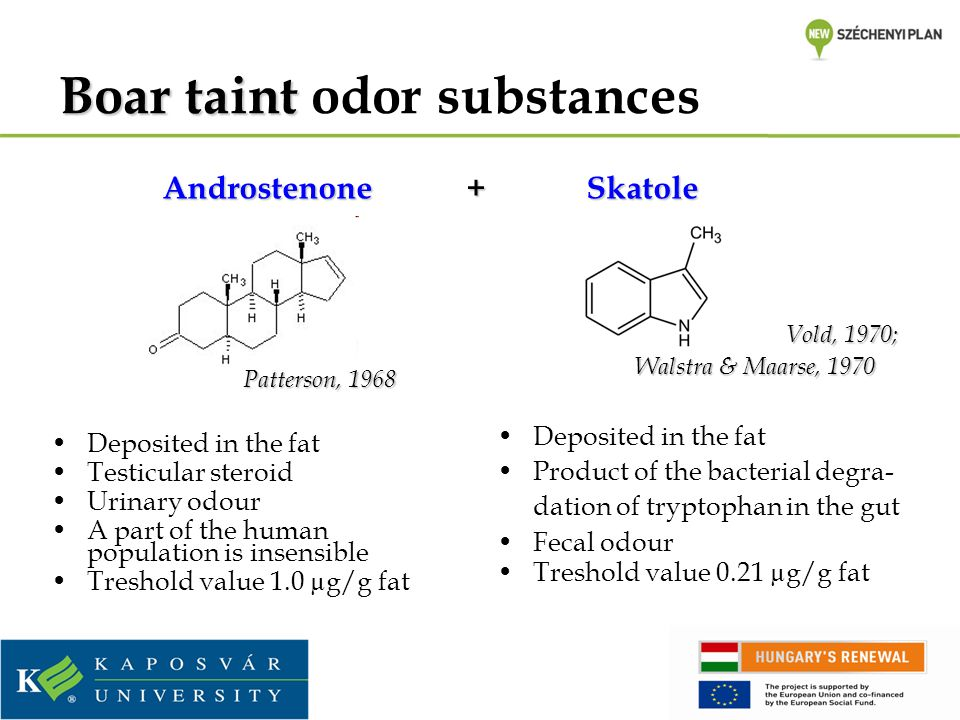 Boartaint Boar taint odor substances Patterson, 1968 Deposited in the fat Testicular steroid Urinary odour A part of the human population is insensible Treshold value 1.0 µg/g fat Vold, 1970; Walstra & Maarse, 1970 Walstra & Maarse, 1970 Deposited in the fat Product of the bacterial degra- dation of tryptophan in the gut Fecal odour Treshold value 0.21 µg/g fat Androstenone + Skatole