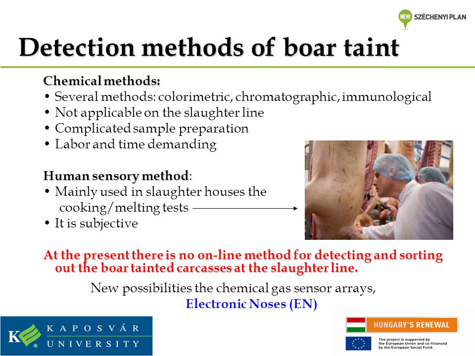 Detection methods of boar taint Chemical methods: Several methods: colorimetric, chromatographic, immunological Not applicable on the slaughter line Complicated sample preparation Labor and time demanding Human sensory method Human sensory method : Mainly used in slaughter houses the cooking/melting tests It is subjective At the present there is no on-line method for detecting and sorting out the boar tainted carcasses at the slaughter line.