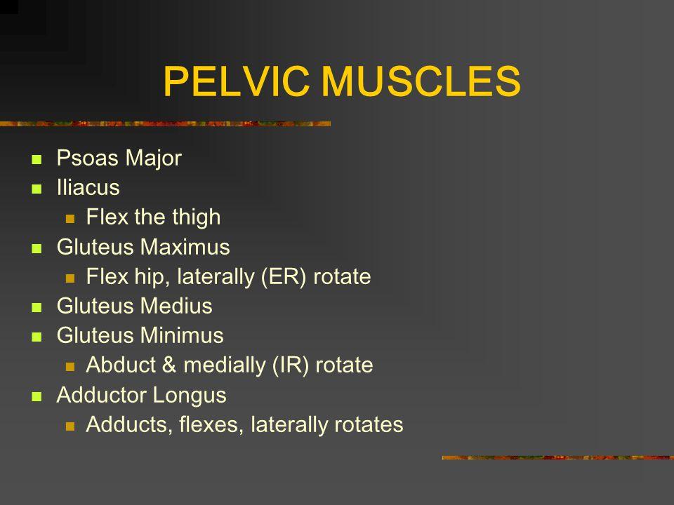 PELVIC MUSCLES Psoas Major Iliacus Flex the thigh Gluteus Maximus Flex hip, laterally (ER) rotate Gluteus Medius Gluteus Minimus Abduct & medially (IR) rotate Adductor Longus Adducts, flexes, laterally rotates