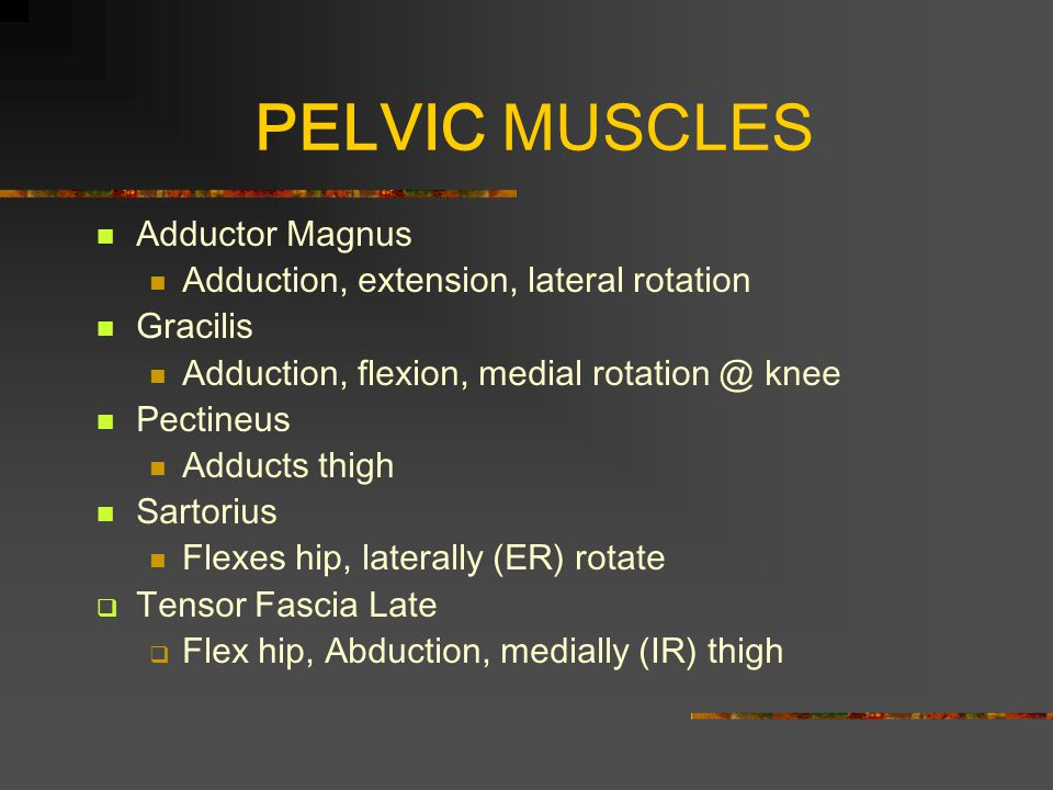 PELVIC MUSCLES Adductor Magnus Adduction, extension, lateral rotation Gracilis Adduction, flexion, medial rotation @ knee Pectineus Adducts thigh Sartorius Flexes hip, laterally (ER) rotate  Tensor Fascia Late  Flex hip, Abduction, medially (IR) thigh