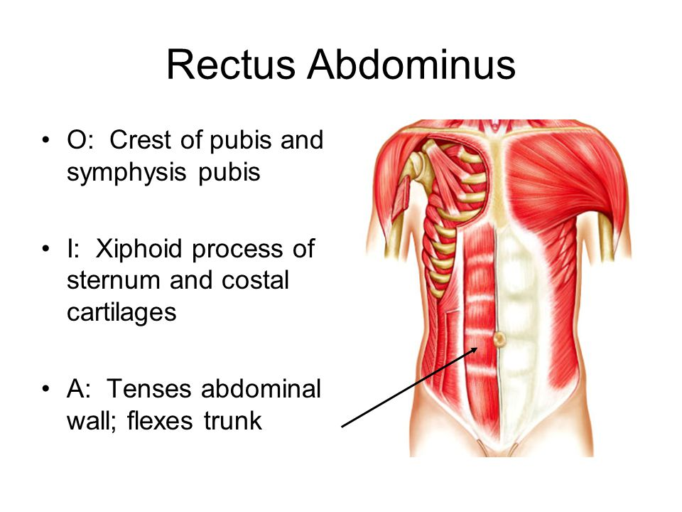 Rectus Abdominus O: Crest of pubis and symphysis pubis I: Xiphoid process of sternum and costal cartilages A: Tenses abdominal wall; flexes trunk