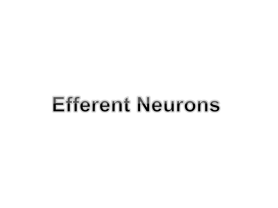Test yourself After-discharge of reflex responses :- a- increase the magnitude of the reflex responses b- delays the onset of fatigue of reflex responses c- involves interneuron circuits d- depends upon spatial summation