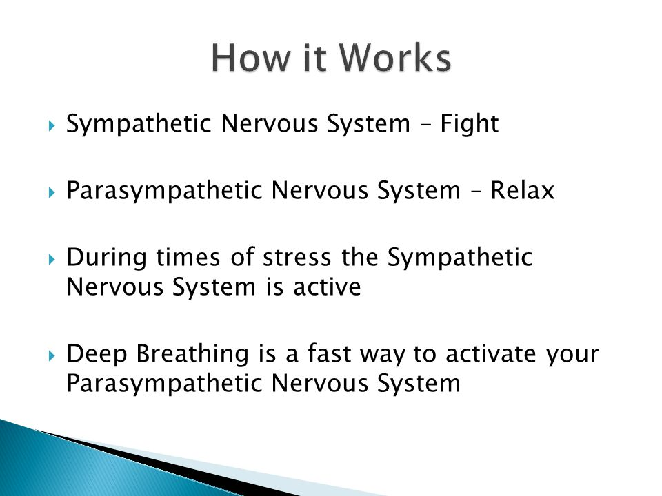  Sympathetic Nervous System – Fight  Parasympathetic Nervous System – Relax  During times of stress the Sympathetic Nervous System is active  Deep