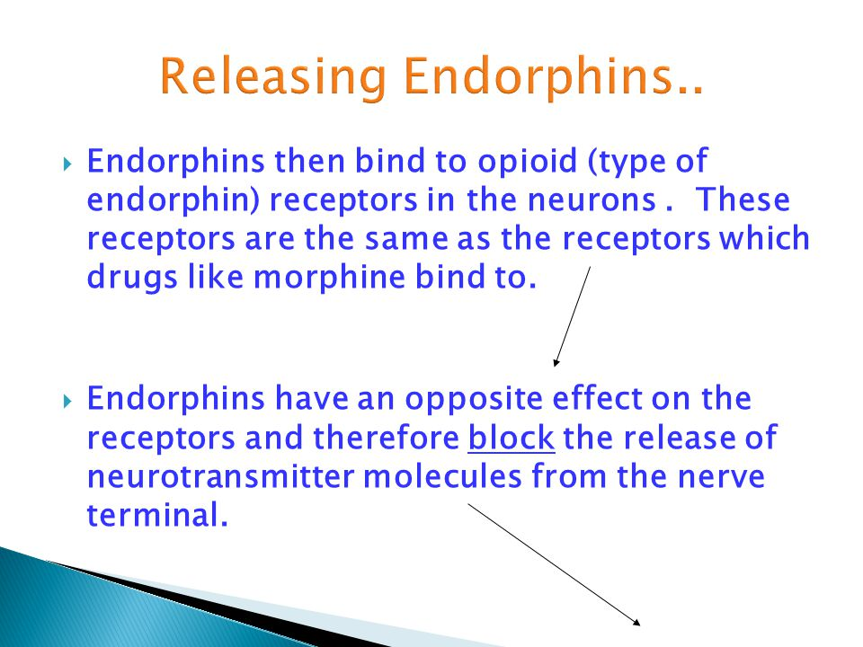  Endorphins then bind to opioid (type of endorphin) receptors in the neurons. These receptors are the same as the receptors which drugs like morphine