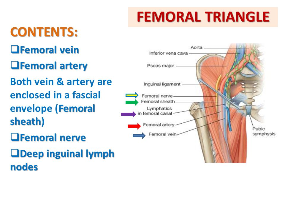 FEMORAL TRIANGLE CONTENTS:  Femoral vein  Femoral artery Femoral sheath Both vein & artery are enclosed in a fascial envelope (Femoral sheath)  Fem