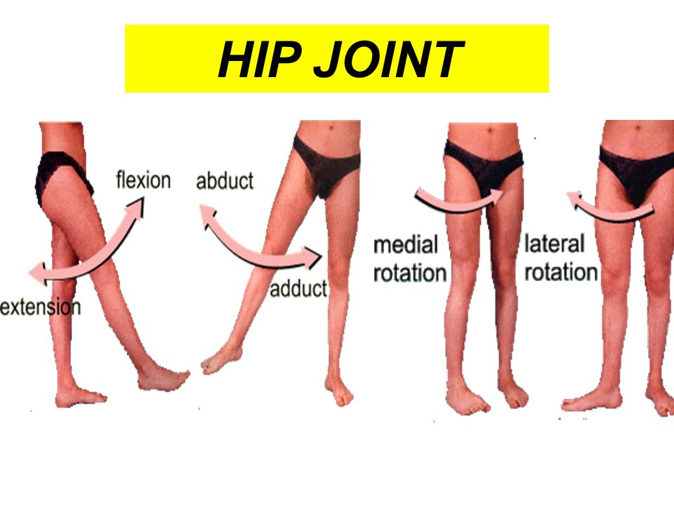 3 compartments The thigh is divided into 3 compartments by 3 intermuscular septa (extending from deep fascia into femur) Anterior Compartment  Extensors of knee: Quadriceps femoris  Flexors of hip: 1.