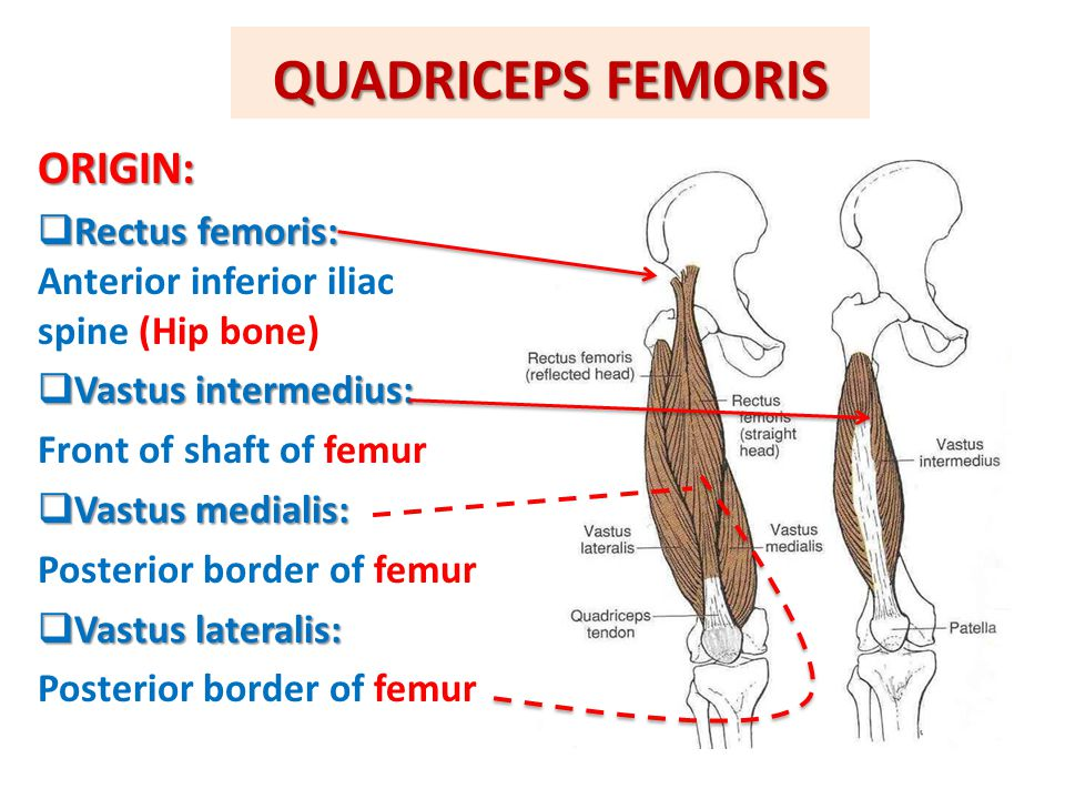 QUADRICEPS FEMORIS ORIGIN:  Rectus femoris:  Rectus femoris: Anterior inferior iliac spine (Hip bone)  Vastus intermedius: Front of shaft of femur