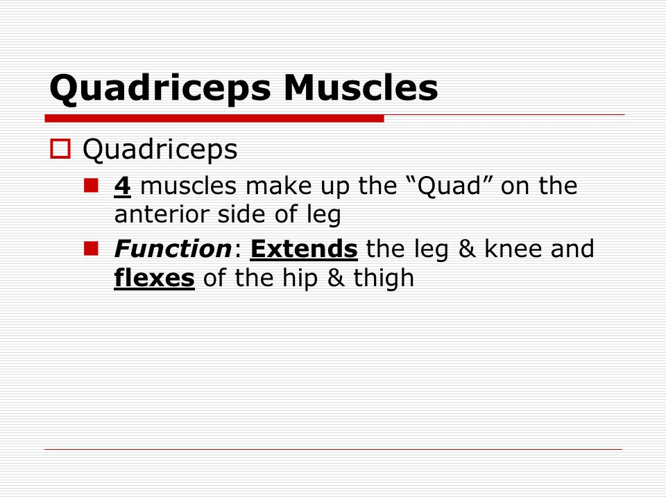 "Quadriceps Muscles  Quadriceps 4 muscles make up the ""Quad"" on the anterior side of leg Function: Extends the leg & knee and flexes of the hip & thig"