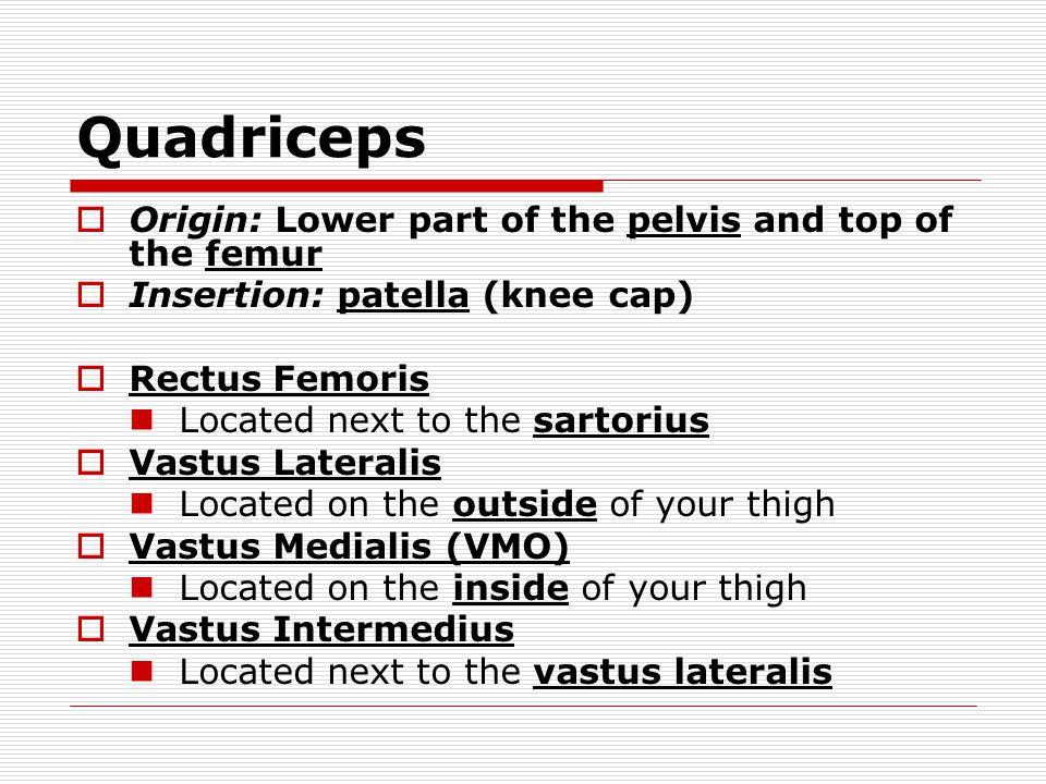 Quadriceps  Origin: Lower part of the pelvis and top of the femur  Insertion: patella (knee cap)  Rectus Femoris Located next to the sartorius  Vastus Lateralis Located on the outside of your thigh  Vastus Medialis (VMO) Located on the inside of your thigh  Vastus Intermedius Located next to the vastus lateralis