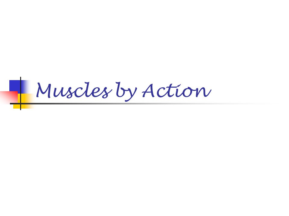 Muscles by Action