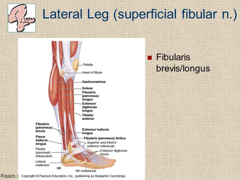 Frolich, Human Anatomy, Lower LImb Lateral Leg (superficial fibular n.) Fibularis brevis/longus