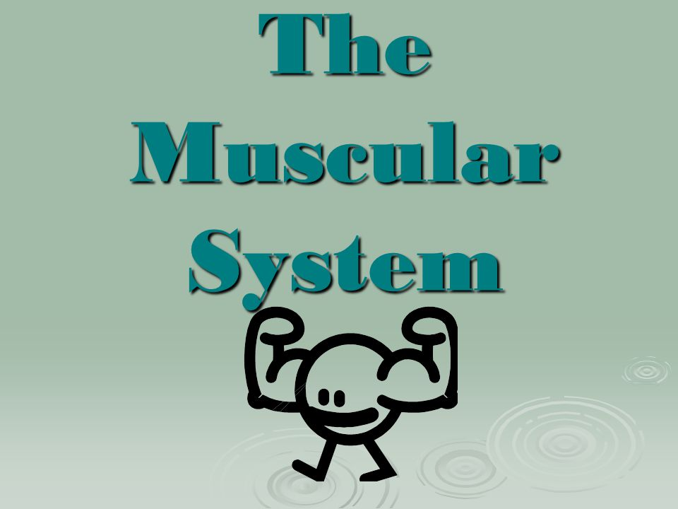 What is the smallest muscle? Stapedius (Inside the ear)