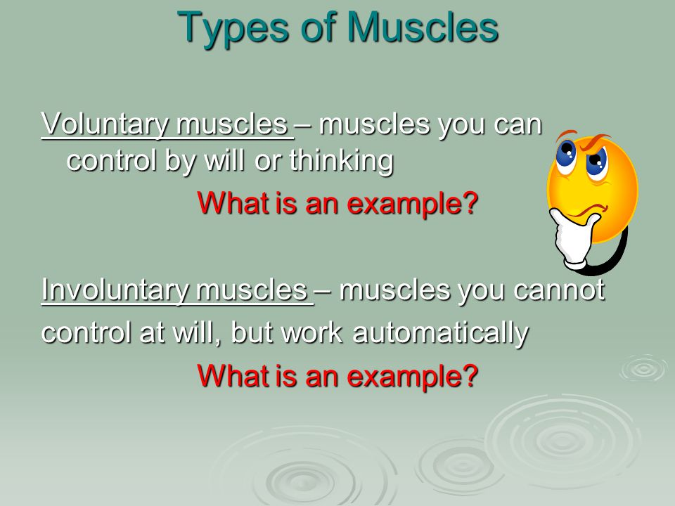 Different Kinds of Muscles 1.Skeletal muscle (voluntary) 2.