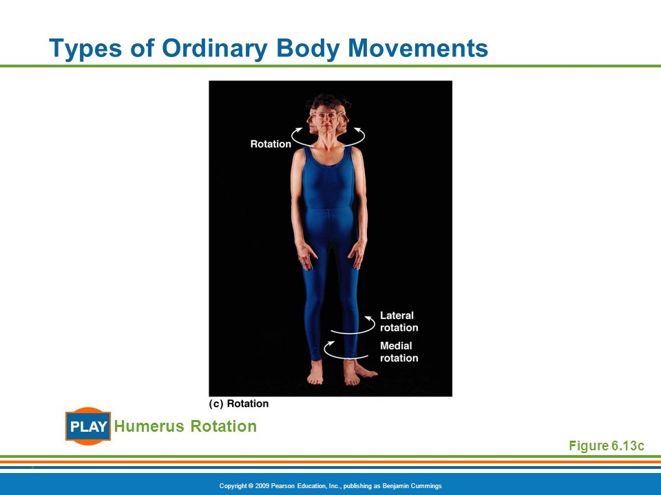 Copyright © 2009 Pearson Education, Inc., publishing as Benjamin Cummings Types of Ordinary Body Movements Humerus Rotation PLAY Figure 6.13c