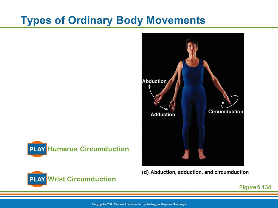 Copyright © 2009 Pearson Education, Inc., publishing as Benjamin Cummings Types of Ordinary Body Movements Wrist Circumduction PLAY Humerus Circumduct