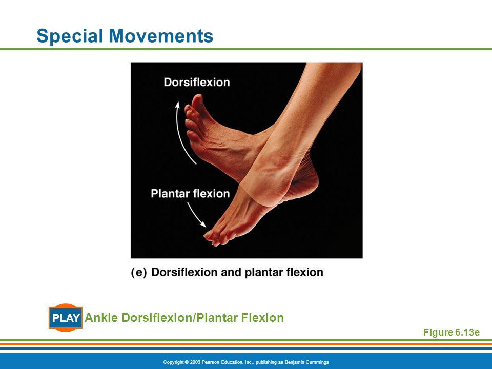 Copyright © 2009 Pearson Education, Inc., publishing as Benjamin Cummings Special Movements Figure 6.13e Ankle Dorsiflexion/Plantar Flexion PLAY
